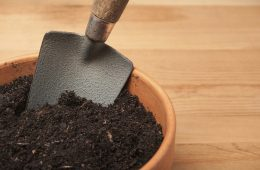 Soil for Growing Organic