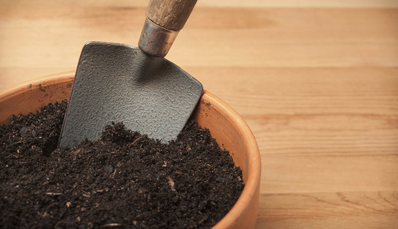How to know if soil is fit for growing organic seeds for Minerals present in soil
