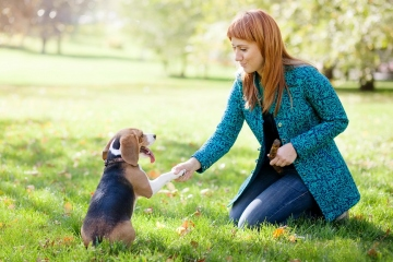 How To Train Your Dog To Behave Well In Front Of Guests?