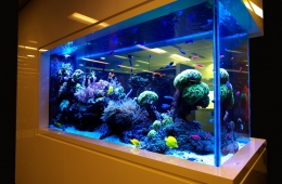 The Beginners Guide To Preparing Your Fish Tank For Those Slippery Pets