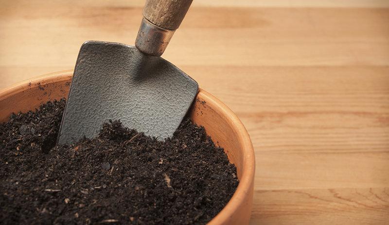 Soil for Growing Organic