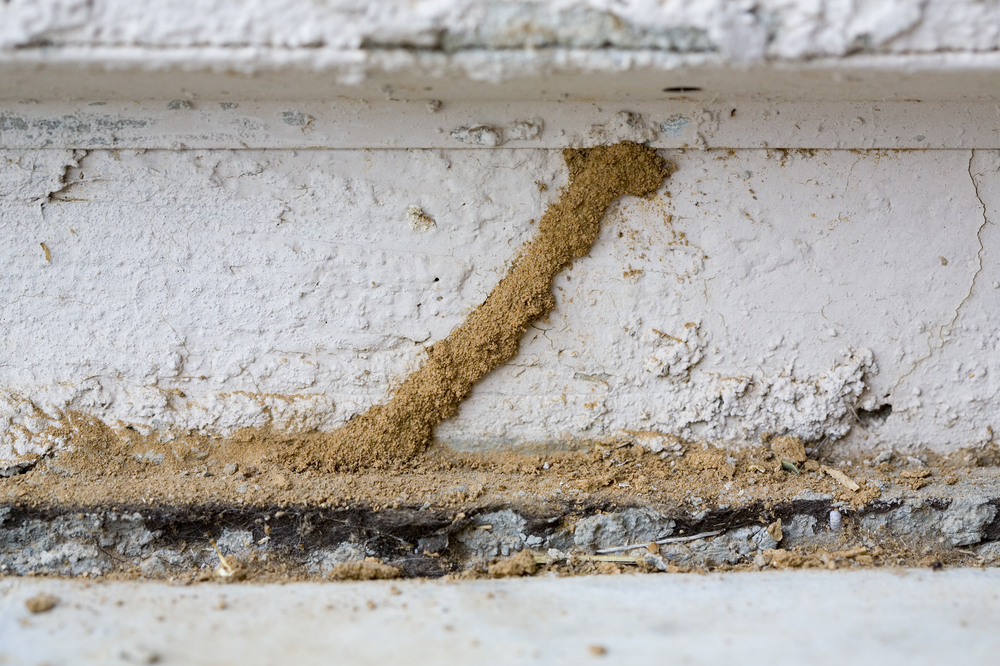 4 Signs That You're Dealing With A Termite Infestation